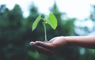 going green sustainability