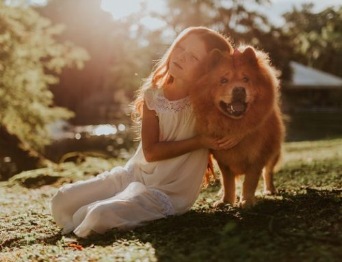 How family pets help kids manage stress and loneliness due to virtual learning